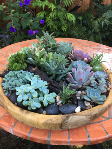 Succulent Serenity Bowl