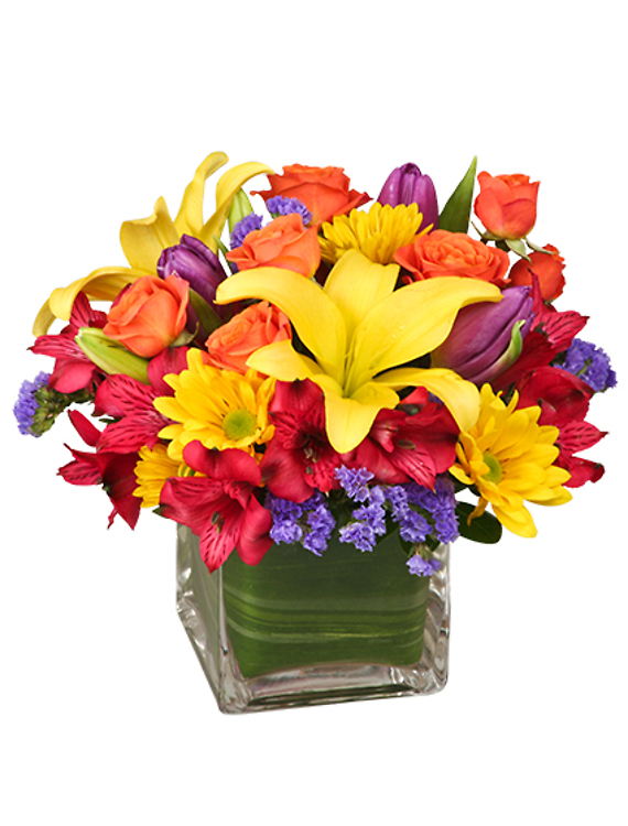 SUN-INFUSED FLOWERS Designer\'s Choice