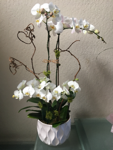 Elegant Orchids, Colors May Vary