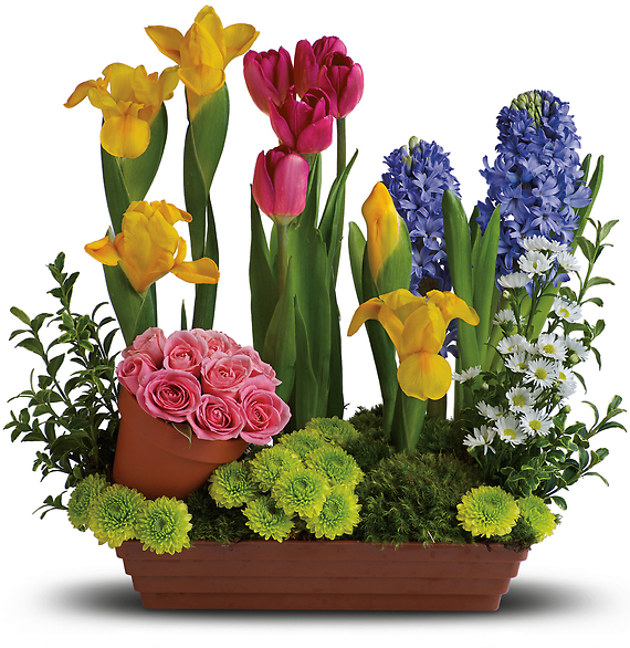 Spring Favorites Designer\'s Choice Fresh-Cut Flowers